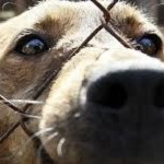 Stop the Sochi Stray Dog Slaughter
