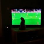 Watching ipTV