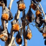 Save 10,000 Bats' Forest Home!