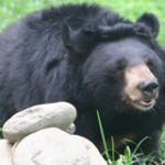 Urge China To Stop Bear Bile Farming