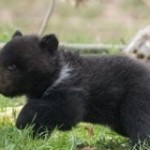 A Swiss Zoo Killed a Healthy Bear Cub