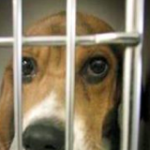 Give Research Dogs and Cats Life After the Laboratory!