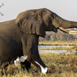 Protect Elephants in South Africa!