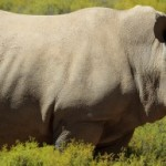 Namibia, Don't Dehorn Rhinos!
