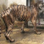"Indonesia: Shut down the ""death zoo!"""