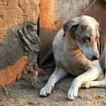 Karachi – Stop Poisoning Dogs