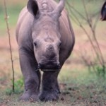 Step Up Anti-Poaching Efforts in South Africa!