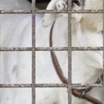Protect Irish Racing Greyhounds