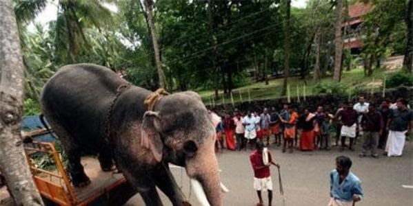 Save Rama the elephant from his abusive handlers