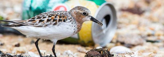 End littering to protect animals and the environment